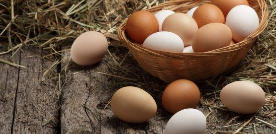 wholesale eggs